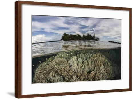 Soft Corals Thrive on a Reef in the Solomon Islands-Stocktrek Images-Framed Art Print