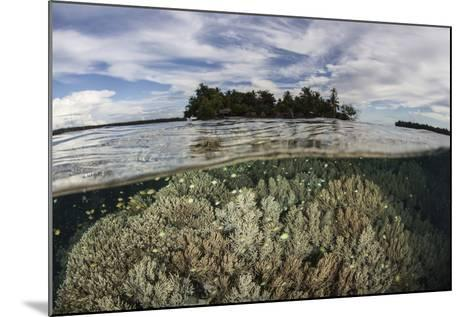 Soft Corals Thrive on a Reef in the Solomon Islands-Stocktrek Images-Mounted Photographic Print