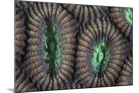 Detail of Coral Polyps on a Reef in Lembeh Strait-Stocktrek Images-Mounted Photographic Print