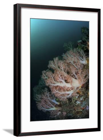 Beautiful Soft Corals Grow on a Deep Reef in Indonesia-Stocktrek Images-Framed Art Print