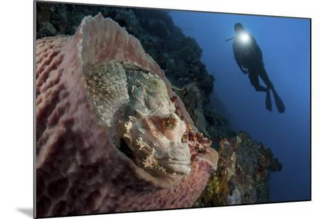 A Diver Looks on at a Tassled Scorpionfish Lying in a Barrel Sponge-Stocktrek Images-Mounted Photographic Print