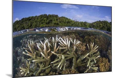 A Slightly Bleached Staghorn Coral Colony in the Solomon Islands-Stocktrek Images-Mounted Photographic Print