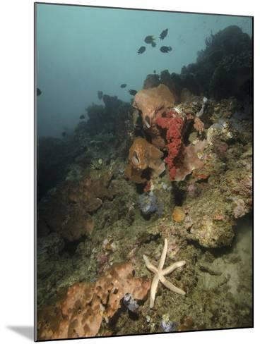Starfish in a Diverse Reef, Lembeh Strait, Indonesia-Stocktrek Images-Mounted Photographic Print