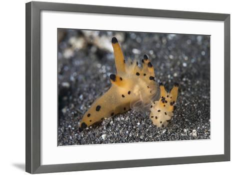 A Pair of Thecacera Nudibranch Mating on the Seafloor-Stocktrek Images-Framed Art Print