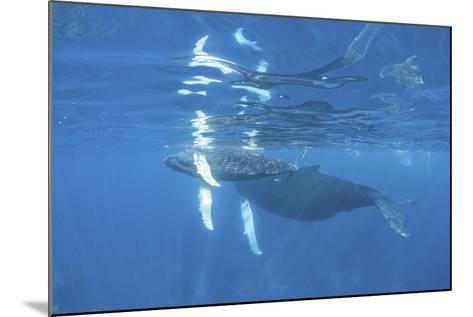 Mother and Calf Humpback Whales Swimming Just under the Surface-Stocktrek Images-Mounted Photographic Print