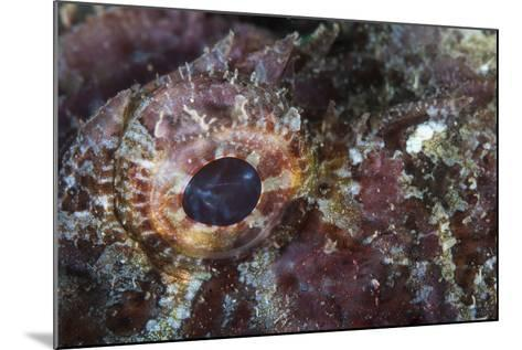 Detail of the Eye of a Scorpionfish-Stocktrek Images-Mounted Photographic Print