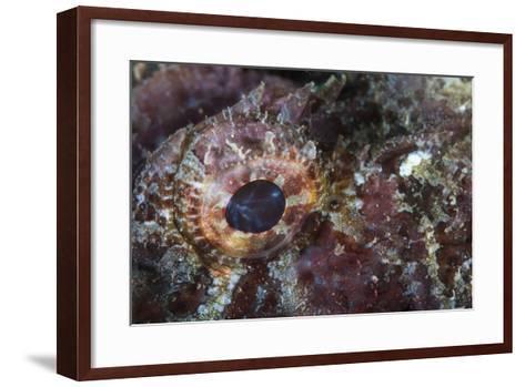 Detail of the Eye of a Scorpionfish-Stocktrek Images-Framed Art Print