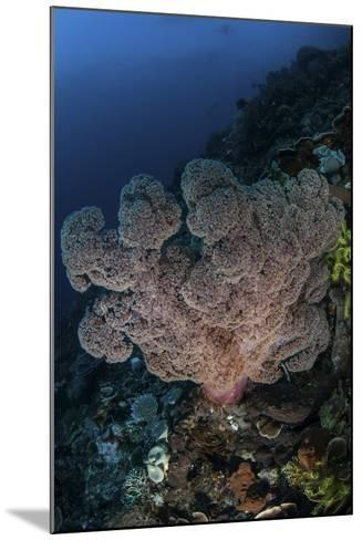 A Large Soft Coral Colony Grows on a Reef Slope in Indonesia-Stocktrek Images-Mounted Photographic Print