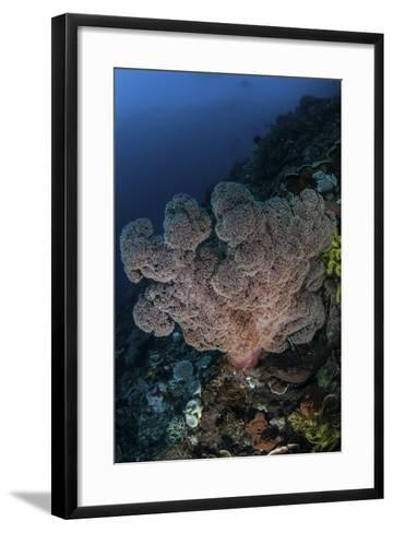 A Large Soft Coral Colony Grows on a Reef Slope in Indonesia-Stocktrek Images-Framed Art Print