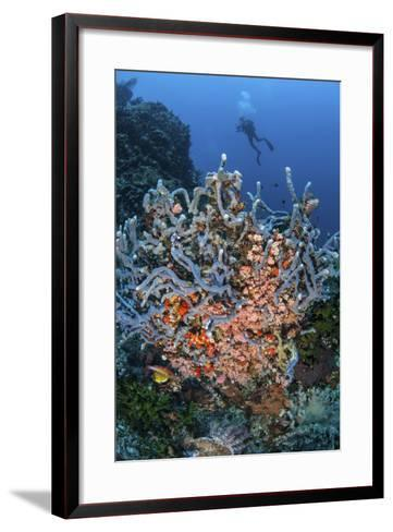 A Scuba Diver Explores a Colorful Coral Reef in Indonesia-Stocktrek Images-Framed Art Print