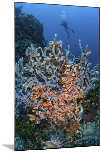 A Scuba Diver Explores a Colorful Coral Reef in Indonesia-Stocktrek Images-Mounted Photographic Print