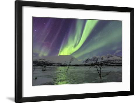 Aurora Borealis on the Frozen Lagoon of Jaegervatnet, Stortind, Lyngen Alps, Troms, Lapland, Norway-Roberto Moiola-Framed Art Print