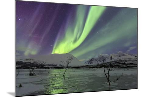 Aurora Borealis on the Frozen Lagoon of Jaegervatnet, Stortind, Lyngen Alps, Troms, Lapland, Norway-Roberto Moiola-Mounted Photographic Print
