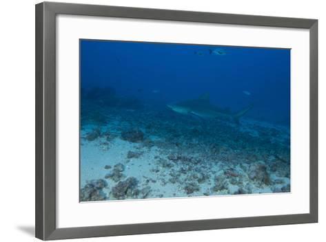 A Large Bull Shark at the Bistro Dive Site in Fiji-Stocktrek Images-Framed Art Print