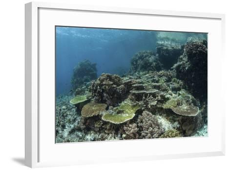 A Healthy Coral Reef Thrives in Komodo National Park, Indonesia-Stocktrek Images-Framed Art Print