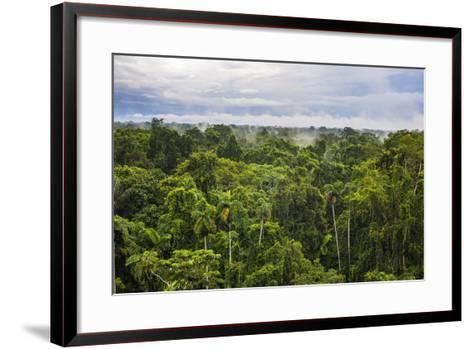 Amazon Rainforest at Sacha Lodge, Coca, Ecuador, South America-Matthew Williams-Ellis-Framed Art Print