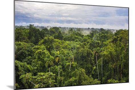Amazon Rainforest at Sacha Lodge, Coca, Ecuador, South America-Matthew Williams-Ellis-Mounted Photographic Print