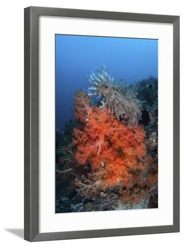 Vibrant Soft Coral Colonies Grow on a Reef in Lembeh Strait-Stocktrek Images-Framed Art Print