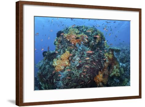 A Colorful, Healthy Coral Reef Thrives in Indonesia-Stocktrek Images-Framed Art Print