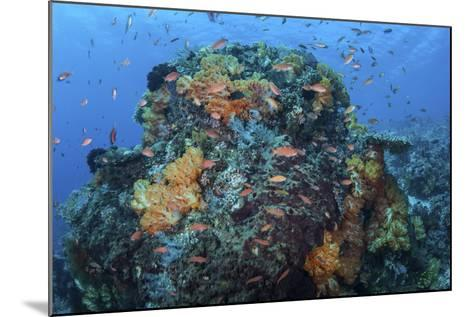 A Colorful, Healthy Coral Reef Thrives in Indonesia-Stocktrek Images-Mounted Photographic Print