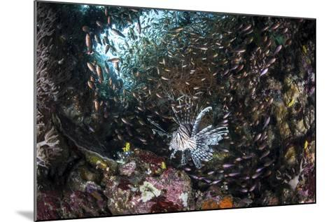 A Lionfish Hunts for Prey on a Colorful Coral Reef-Stocktrek Images-Mounted Photographic Print