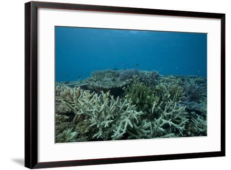 Healthy Corals Cover a Reef in Beqa Lagoon, Fiji-Stocktrek Images-Framed Art Print