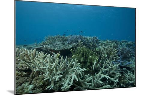 Healthy Corals Cover a Reef in Beqa Lagoon, Fiji-Stocktrek Images-Mounted Photographic Print
