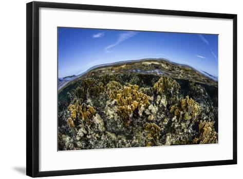 Fire Corals Grow Along a Reef Crest in the Caribbean Sea-Stocktrek Images-Framed Art Print