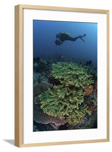 A Diver Swims Above a Healthy Coral Reef in Indonesia-Stocktrek Images-Framed Art Print