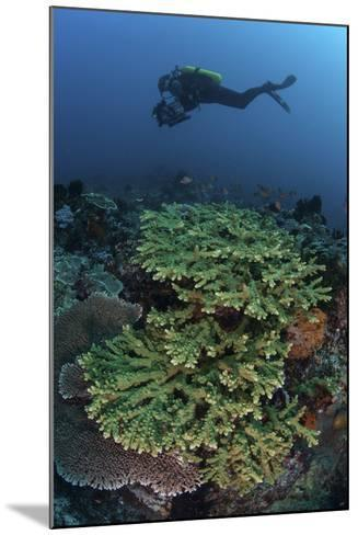 A Diver Swims Above a Healthy Coral Reef in Indonesia-Stocktrek Images-Mounted Photographic Print