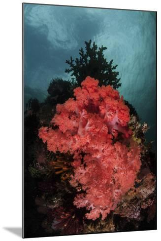 A Soft Coral Colony Grows on a Reef Slope in Indonesia-Stocktrek Images-Mounted Photographic Print