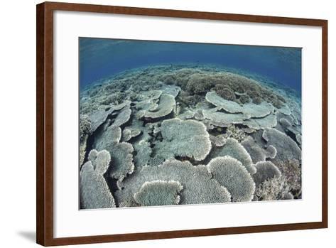 Fragile Corals Grow in Shallow Water in Komodo National Park-Stocktrek Images-Framed Art Print