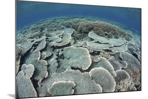 Fragile Corals Grow in Shallow Water in Komodo National Park-Stocktrek Images-Mounted Photographic Print