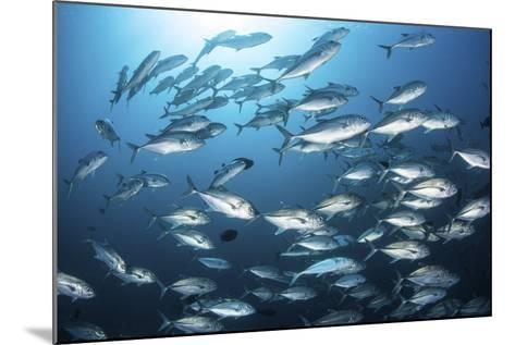 A School of Big-Eye Jacks Above a Coral Reef-Stocktrek Images-Mounted Photographic Print