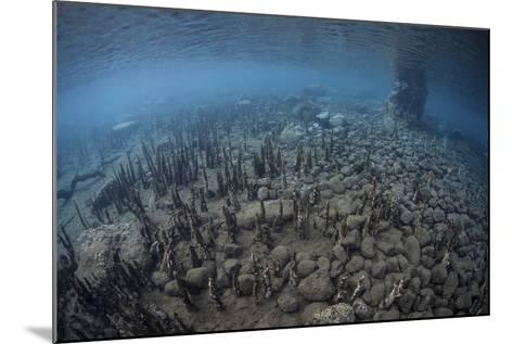 Mangrove Roots Rise from the Seafloor of an Island in Indonesia-Stocktrek Images-Mounted Photographic Print