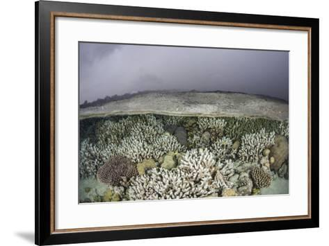 A Fragile Coral Reef Grows in Shallow Water in the Solomon Islands-Stocktrek Images-Framed Art Print