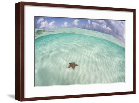 A West Indian Starfish on the Seafloor in Turneffe Atoll, Belize-Stocktrek Images-Framed Art Print