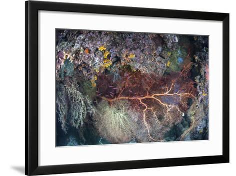 A Colorful Coral Reef Grows Along a Deep Dropoff in the Solomon Islands-Stocktrek Images-Framed Art Print