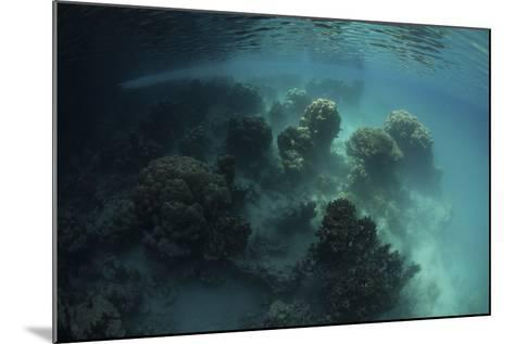 Strange Coral Growth in a Lake in Palau-Stocktrek Images-Mounted Photographic Print