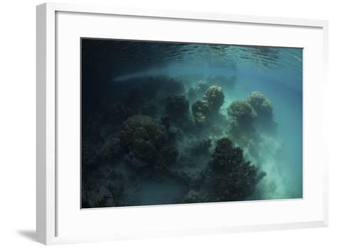 Strange Coral Growth in a Lake in Palau-Stocktrek Images-Framed Art Print