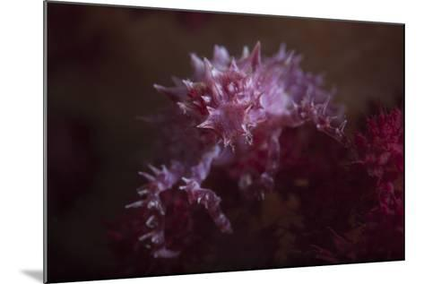 A Soft Coral Crab Blends into its Host Coral Colony-Stocktrek Images-Mounted Photographic Print