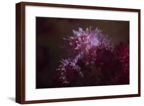 A Soft Coral Crab Blends into its Host Coral Colony-Stocktrek Images-Framed Art Print