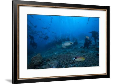 A Large Tawny Nurse Shark Swims Past Divers at the Bistro Dive Site in Fiji-Stocktrek Images-Framed Art Print