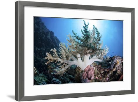 A Soft Coral Colony Grow on a Reef Near the Island of Sulawesi-Stocktrek Images-Framed Art Print