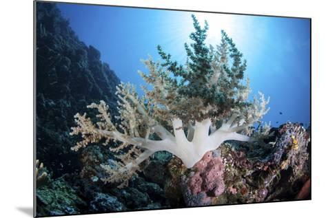 A Soft Coral Colony Grow on a Reef Near the Island of Sulawesi-Stocktrek Images-Mounted Photographic Print