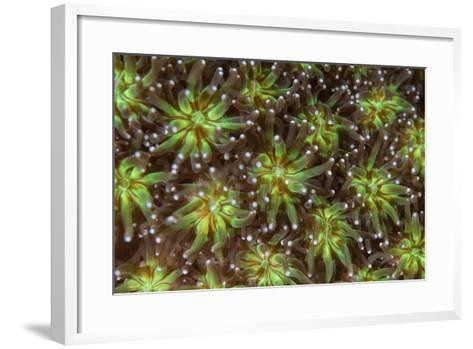 Coral Polyps Wait for Plankton on a Reef-Stocktrek Images-Framed Art Print