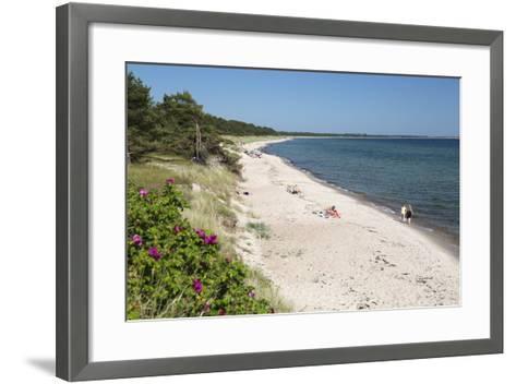 View Along Pine Tree Lined Beach, Nybrostrand, Near Ystad, Skane, South Sweden, Sweden, Scandinavia-Stuart Black-Framed Art Print