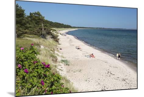 View Along Pine Tree Lined Beach, Nybrostrand, Near Ystad, Skane, South Sweden, Sweden, Scandinavia-Stuart Black-Mounted Photographic Print
