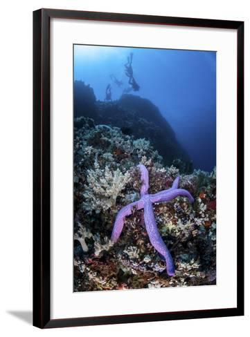 A Purple Sea Star Clings to a Diverse Reef Near the Island of Bangka, Indonesia-Stocktrek Images-Framed Art Print