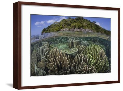 A Diverse Array of Reef-Building Corals in Raja Ampat, Indonesia-Stocktrek Images-Framed Art Print